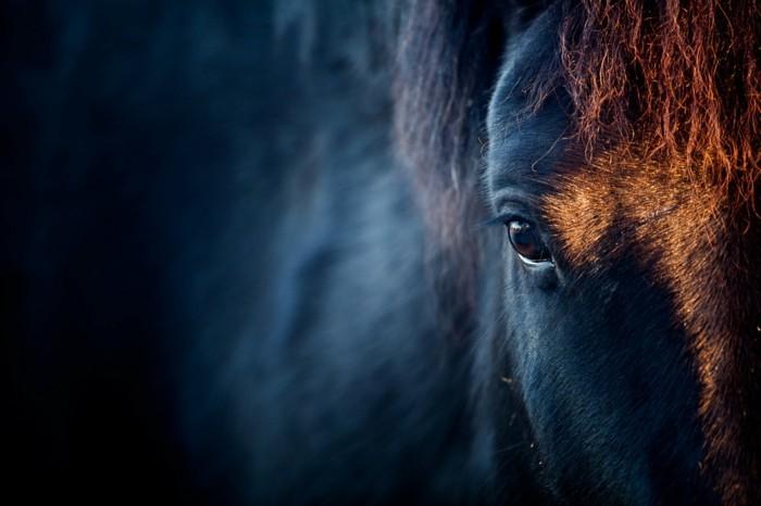 schöne-pferde-bilder-die-schönheit-des-wilden-geistes