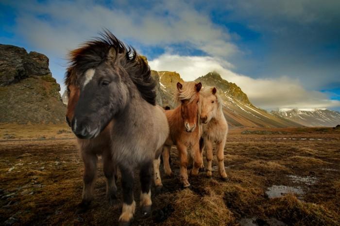 schöne-pferde-bilder-die-schönheit-einer-wilden-herde