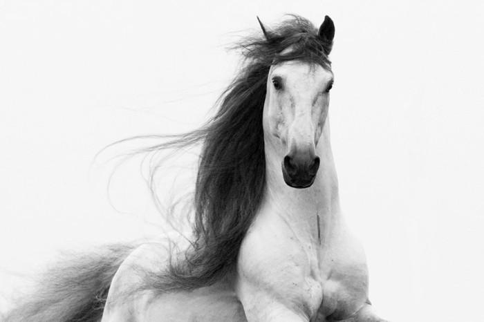 schöne-pferde-bilder-ein-Freiheit-symbolisierendes-pferd