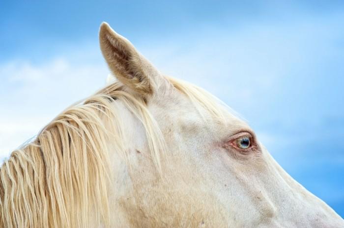 schöne-pferde-bilder-ein-bezauberndes-pferd