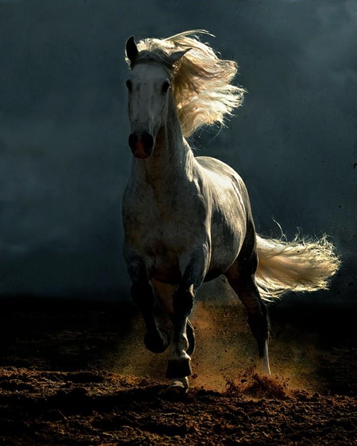 schöne-pferde-bilder-ein-galoppierendes-pferd