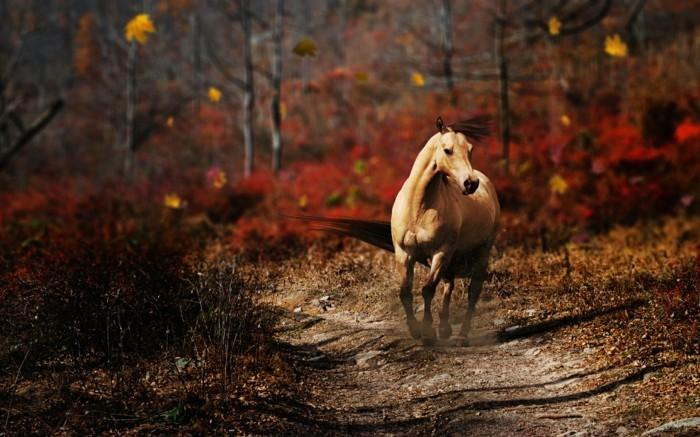 schöne-pferde-bilder-ein-inspirierendes-bild