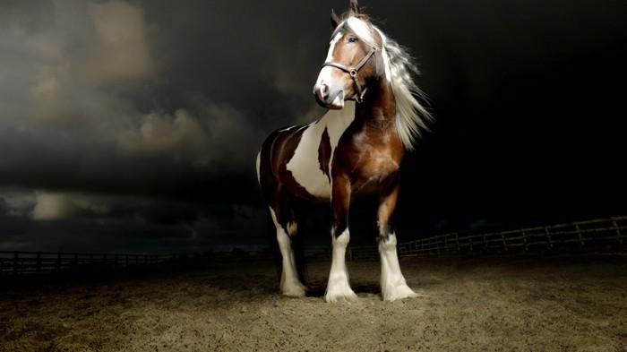 schöne-pferde-bilder-ein-starkes-pferd