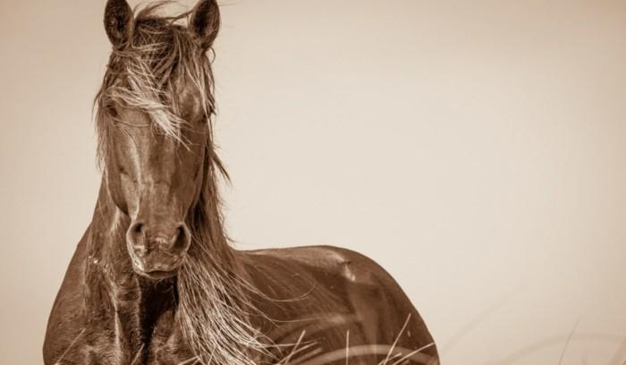 schöne-pferde-bilder-ein-traumhaftes-pferd