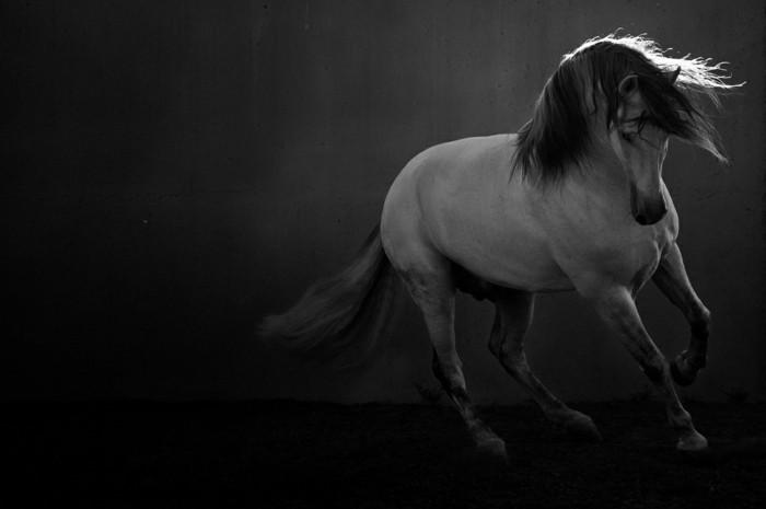schöne-pferde-bilder-ein-weißes-pferd