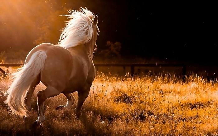 schöne-pferde-bilder-ein-wildes-pferd