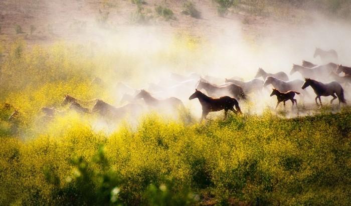 schöne-pferde-bilder-eine-wilde-herde