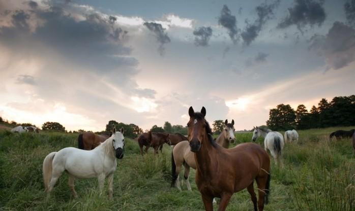 schöne-pferde-bilder-eines-unserer-lieblingsbilder