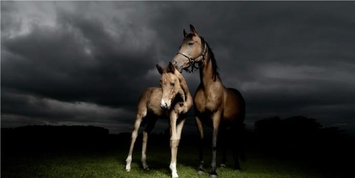 schöne-pferde-bilder-hier-ist-noch-ein-traumhaftes-bild