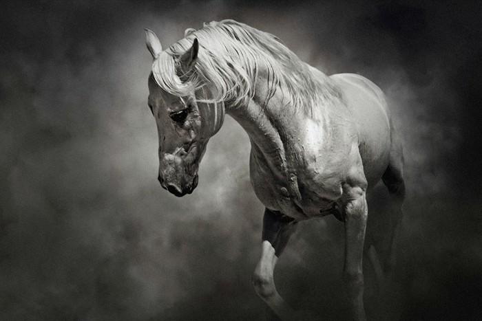 schöne-pferde-bilder-hier-ist-noch-ein-ausgefallenes-pferdebild
