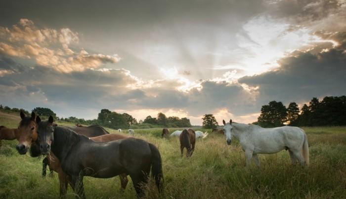 schöne-pferde-bilder-hier-stellen-wir-ihnen-ein-ausgefallenes-pferdebild-vor