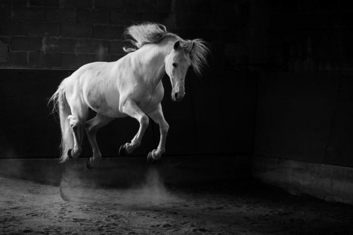 schöne-pferde-bilder-hier-stellen-wir-ihnen-ein-inspirerendes-pferdebild-vor-resized