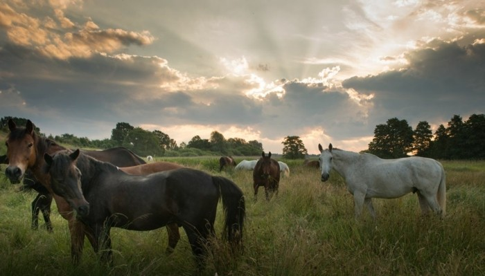 schöne-pferde-bilder-hier-stellen-wir-ihnen-eines-der-schönsten-pferdebilder-vor