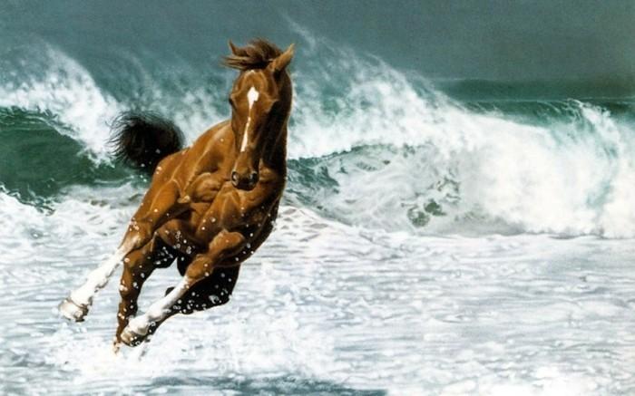schöne-pferde-bilder-hier-stellen-wir-ihnen-noch-ein-tolles-bild-vor