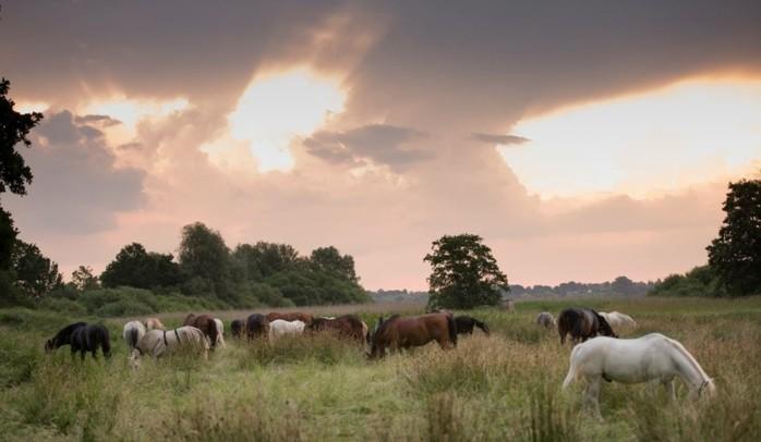 schöne-pferde-bilder-hier-ist-noch-ein-tolles-pferdebild