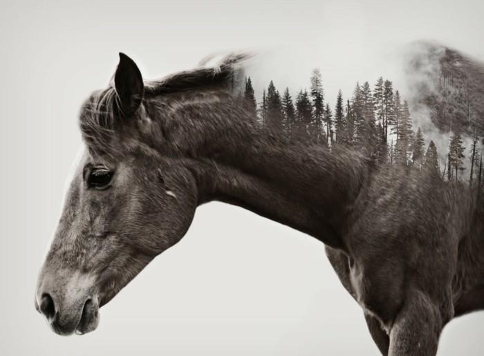 Sch Ne Zeichnungen schöne pferde bilder die die großartigkeit der pferde zeigen archzine