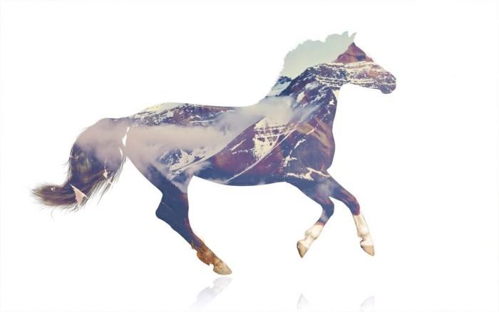 schöne-pferde-bilder-mit-Mehrfachbelichtung-tolle-bilder-machen