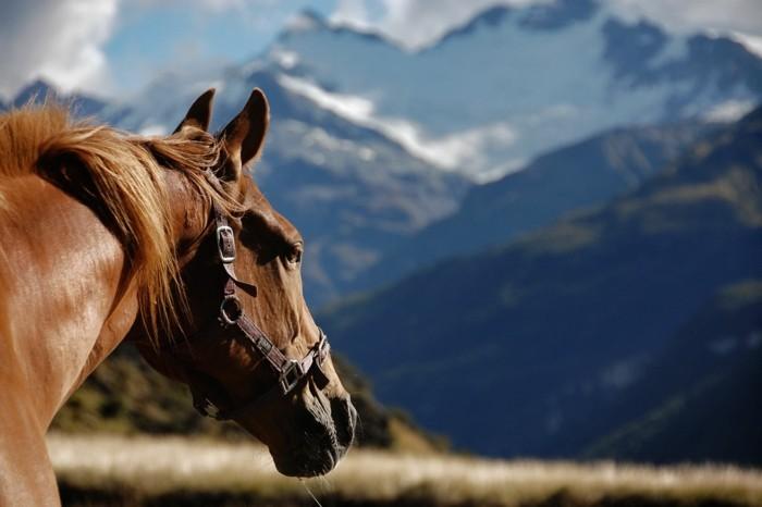 schöne-pferde-bilder-noch-ein-inspirierendes-pferdebild
