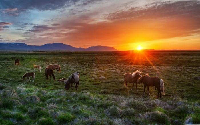 schöne-pferde-bilder-noch-ein-tolles-bild