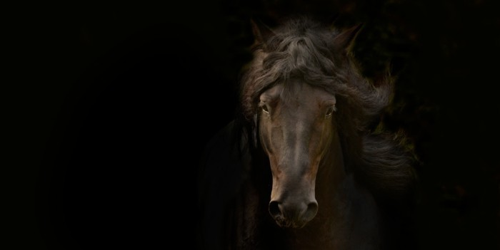 schöne-pferde-bilder-noch-ein-tolles-pferdebild
