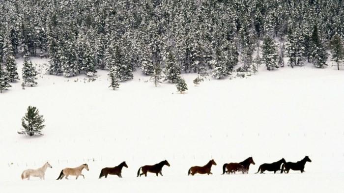 schöne-pferde-bilder-pferde-im-wald