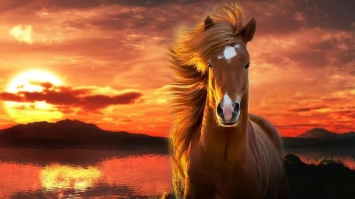 schöne-pferde-bilder-pferdebilder-können-inspirierend-sein