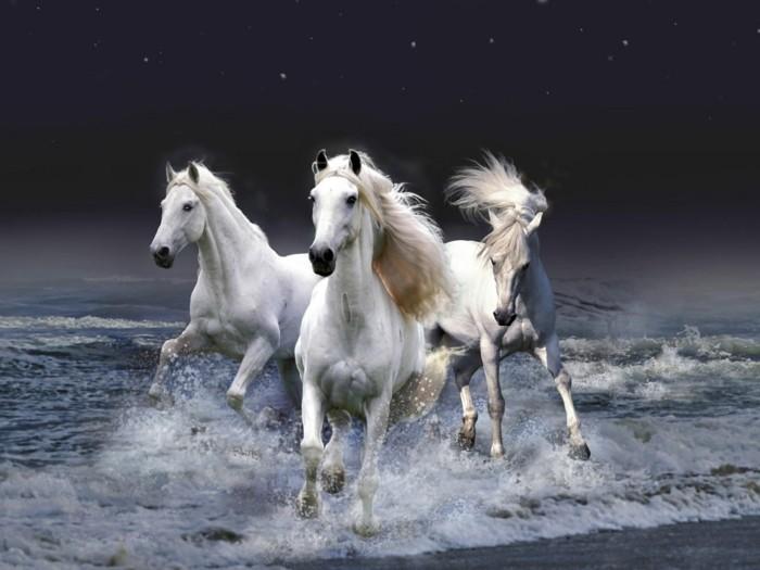 schöne-pferde-bilder-schön-aussehende-pferde
