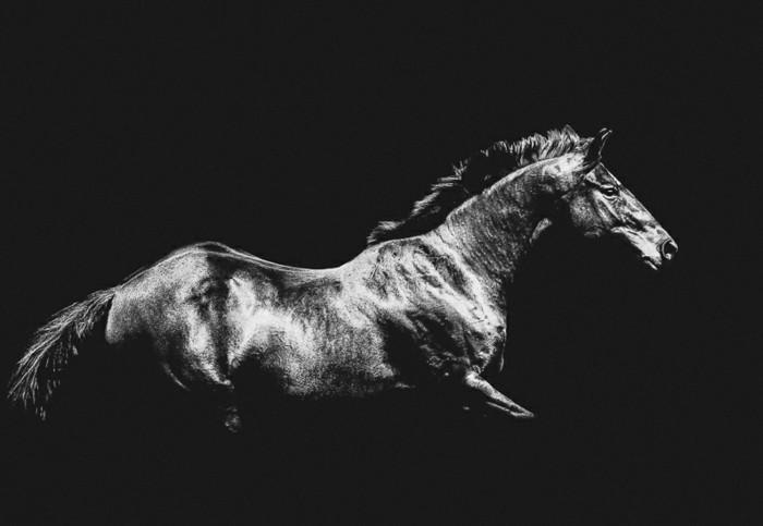 schöne-pferde-bilder-schöne-bilder-mit-pferden