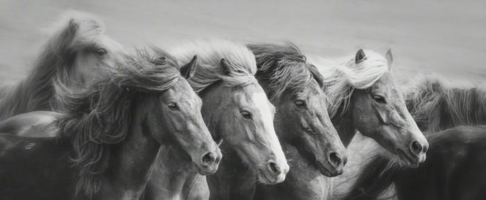 sch ne pferde bilder die die gro artigkeit der pferde. Black Bedroom Furniture Sets. Home Design Ideas