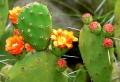 Exotische Pflanzen im Garten: Informatives und Pflegetipps