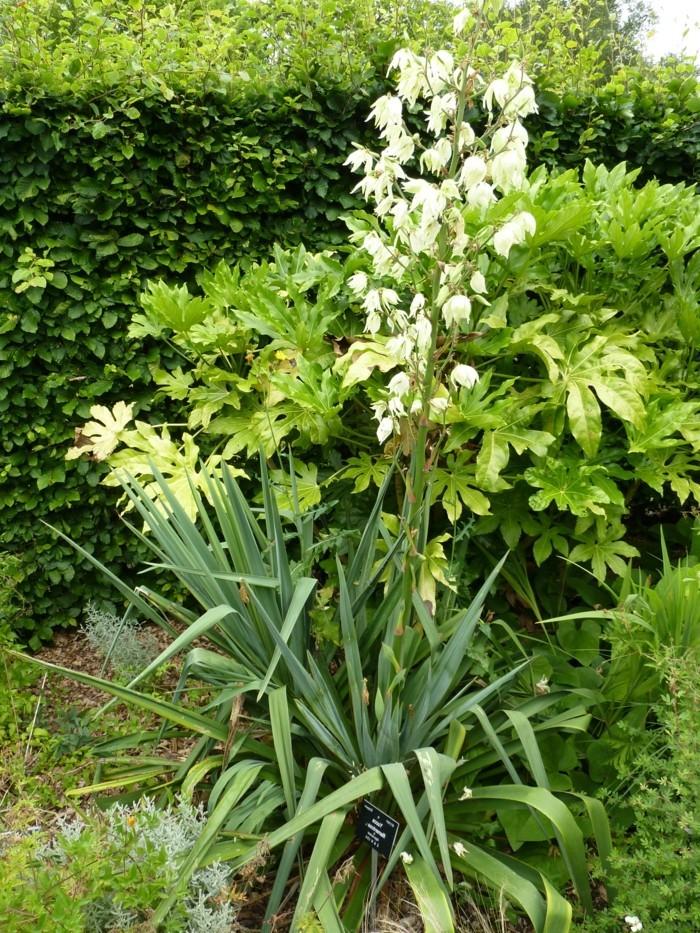 schöne-exotische-pflanze-im-garten