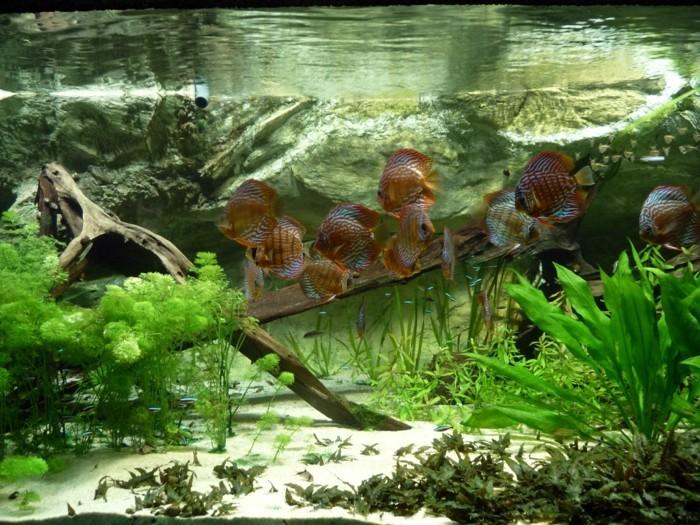 Teich bepflanzen mehr als 70 ideen for Fische im teich