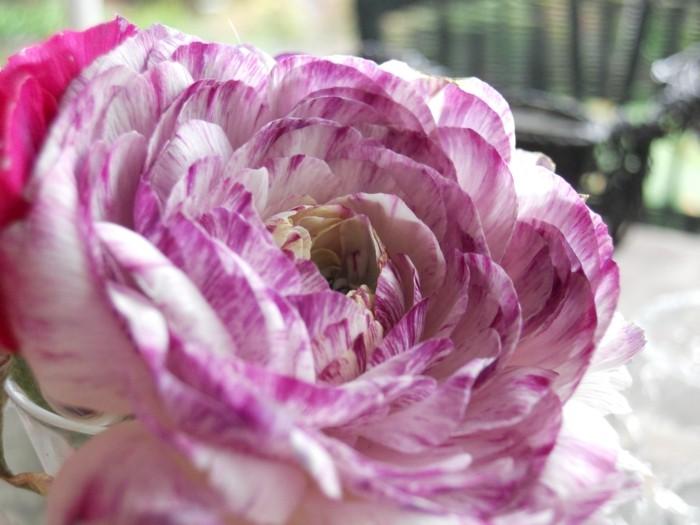 tischdeko-lila-noch-ein-vorschlag-für-lila-dekoration