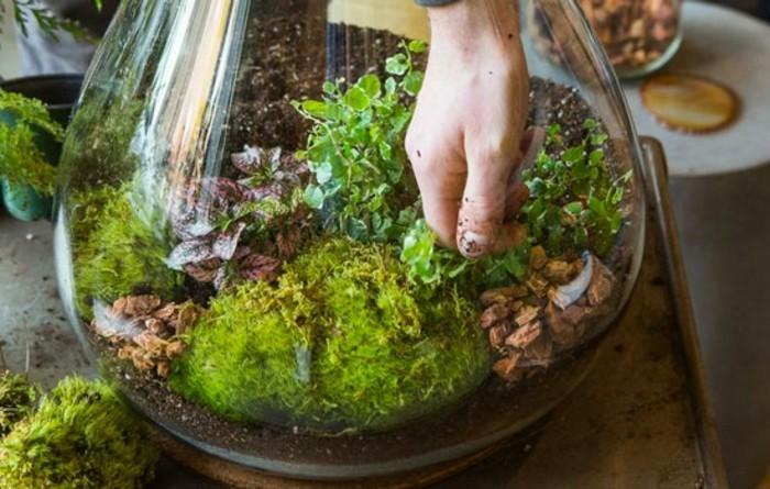 terrarium-selber-bauen-ein-ausgefallenes-terrarium-für-pflanzen