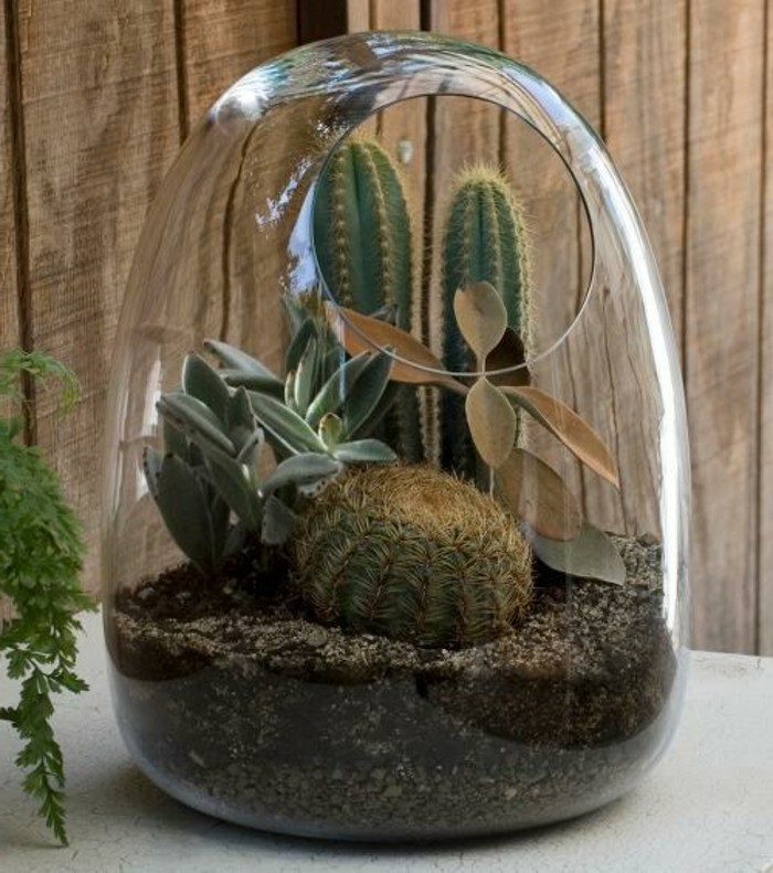 terrarium-selber-bauen-eine-gute-idee-für-terrarium-für-pflanzen