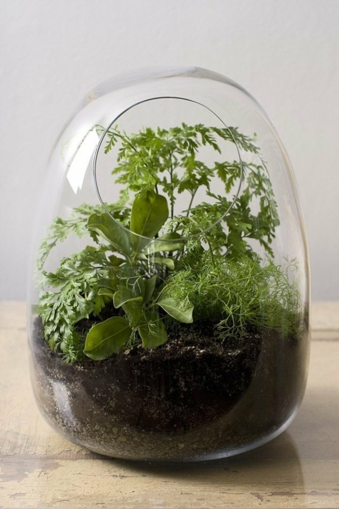 terrarium-selber-bauen-hier-ist-ein-mini-terrarium-für-pflanzen