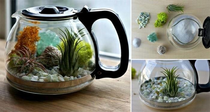 terrarium-selber-bauen-hier-sind-pflanzen-im-terrarium