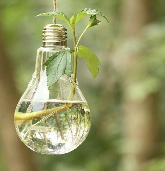 terrarium-selber-bauen-jeder-von-uns-könnte-ein-terrarium-selber-bauen