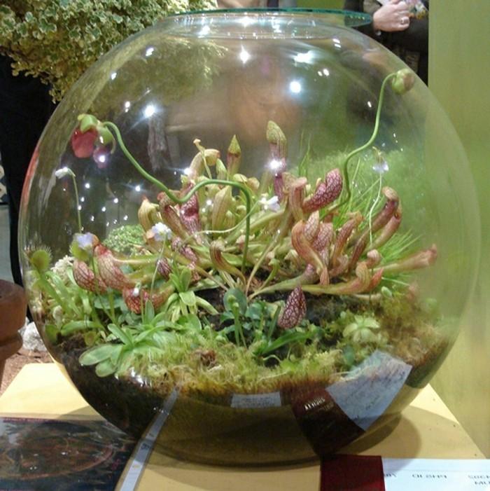 terrarium-selber-bauen-mini-terrarium-für-pflanzen