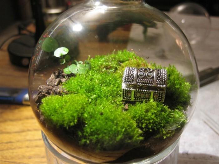 terrarium-selber-bauen-noch-ein-tolles-mini-terrarium-für-pflanzen