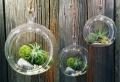 Über 40 Vorschläge, wie Sie ein Terrarium selber bauen