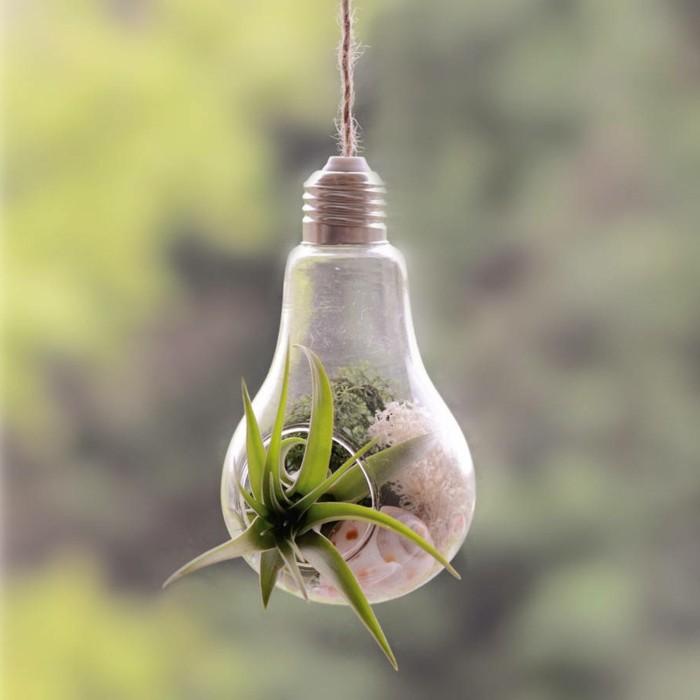 terrarium-selber-bauen-sie-könnten-ein-terrarium-selber-bauen