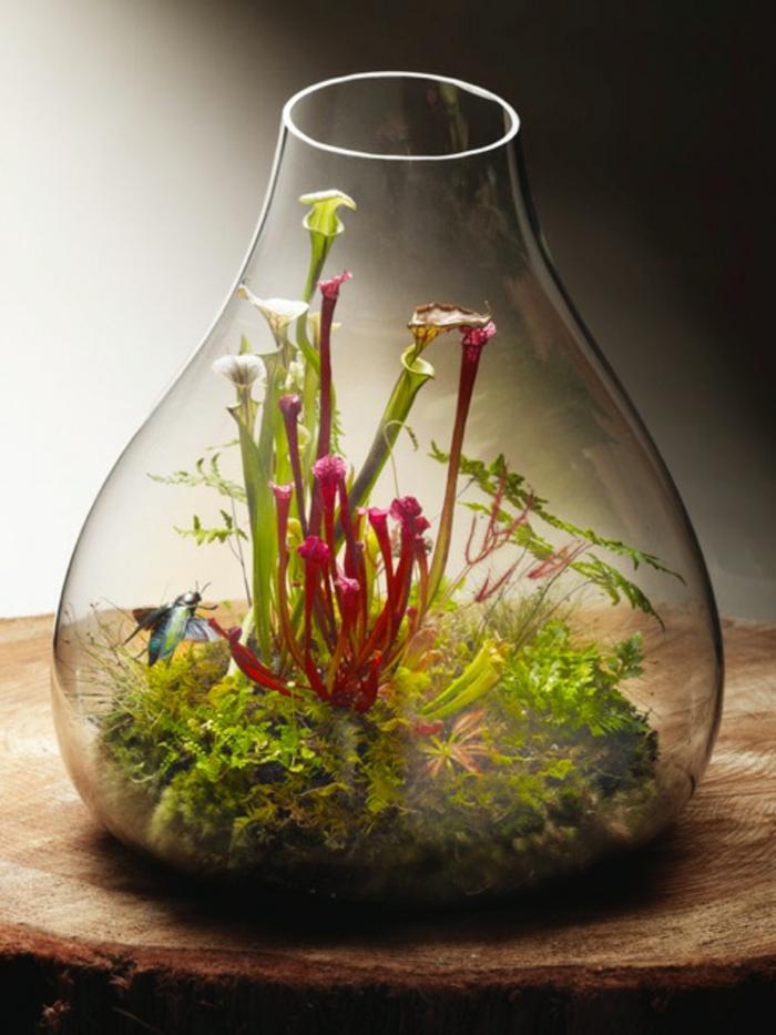 terrarium-selber-bauen-tolle-idee-für-pflanzen-terrarium