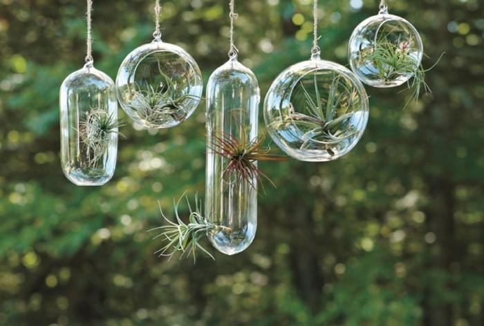 terrarium-selber-bauen-tolle-pflanzen-im-terrarium
