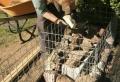 DIY Trockenmauer – Gabionen (Steinwand) selber bauen ohne Beton