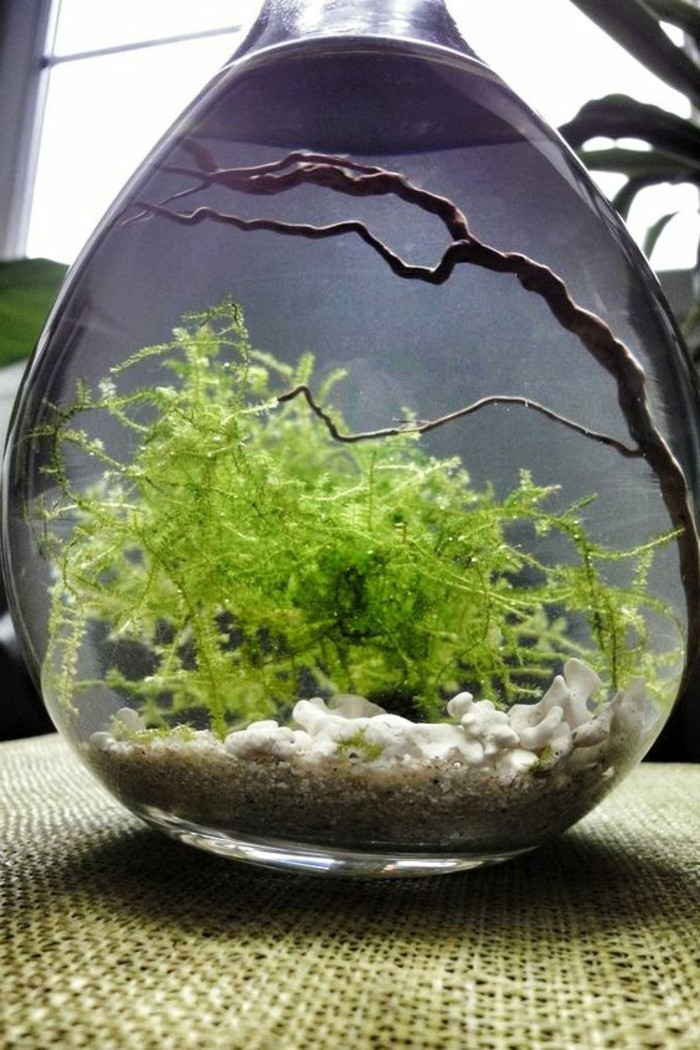 aquarium-birne-meerespflanzen-aste-kleines-aquarium-aquarium-gestalten-aquarium-einrichten