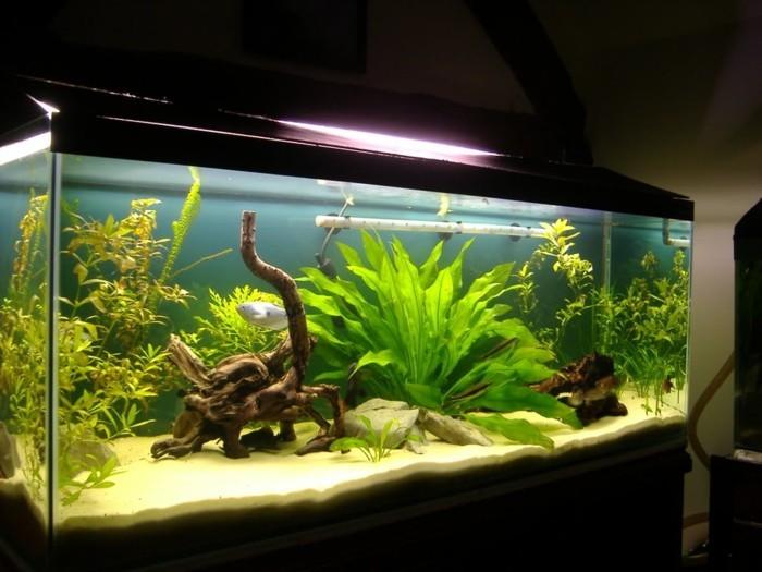 aquarium-deko-aquarium-gestaltung-aquarium-fur-kleine-fische-aquarium-einrichtung