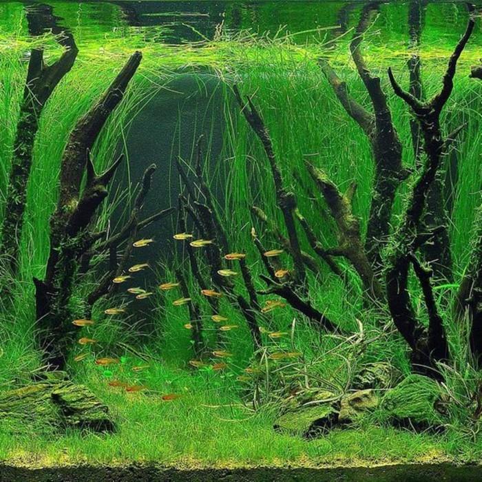 aquarium-deko-mit-pflanzen-wasserpflanzen-aste-kleine-fische-sand-aquarium-einrichtung
