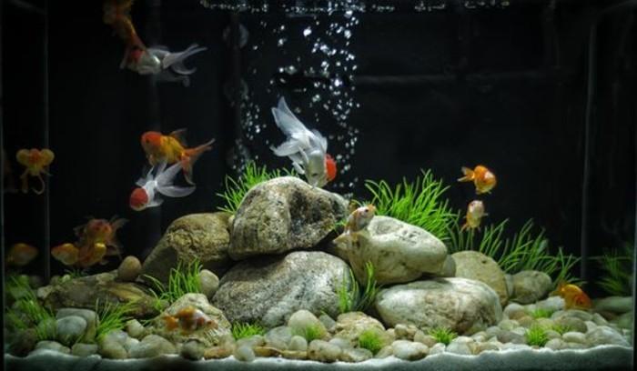 aquarium-einrichtung-aqarium-deko-aquarium-fur-fische-mit-steinen-gestalten