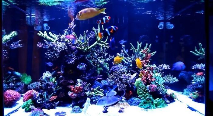 Aquarium Einrichtung sorgt für das Wohlfühlen der Wassertiere ...